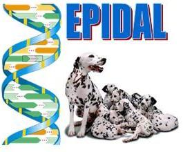 EPIDAL